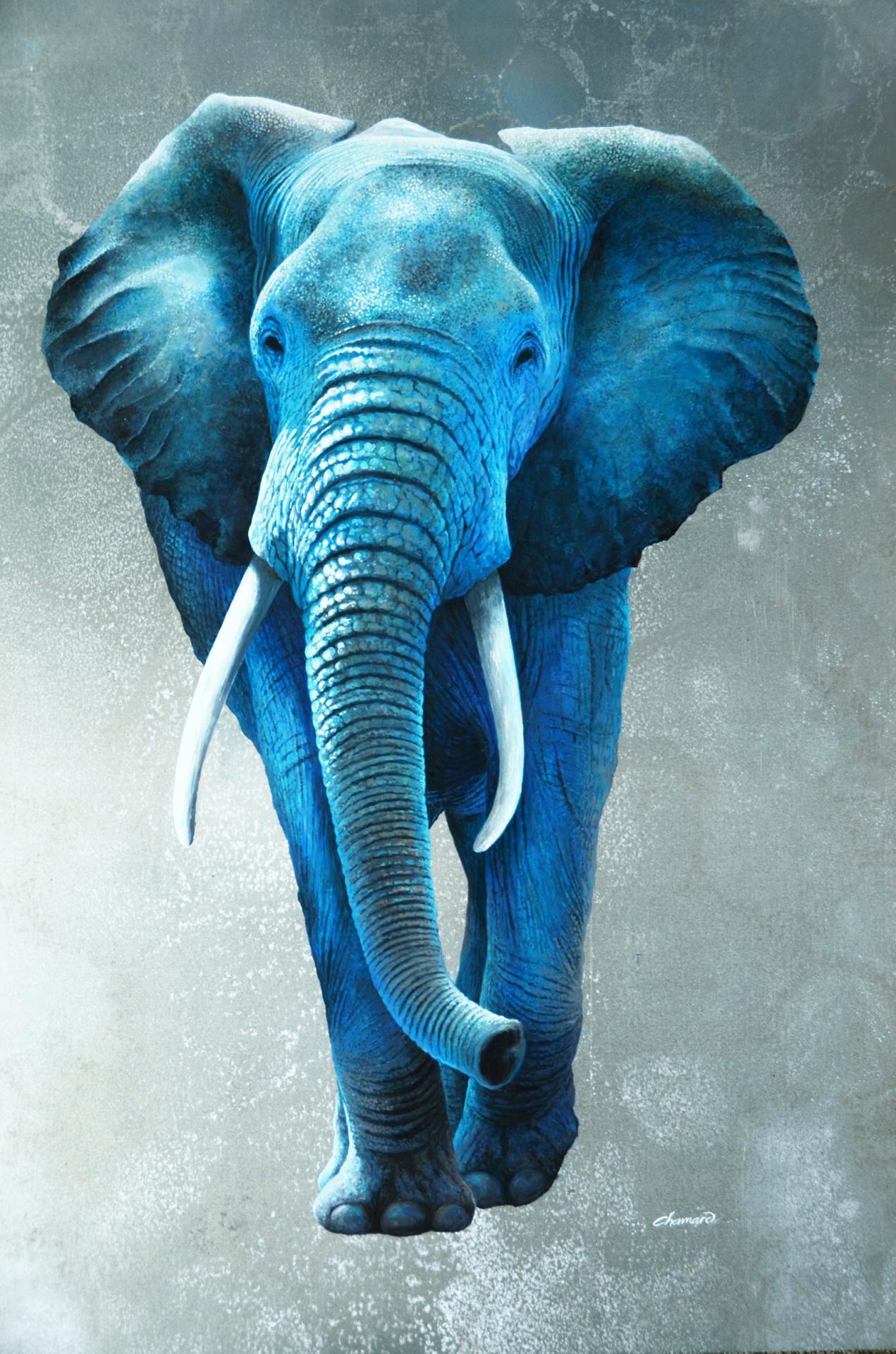 éléphant amsterdam7